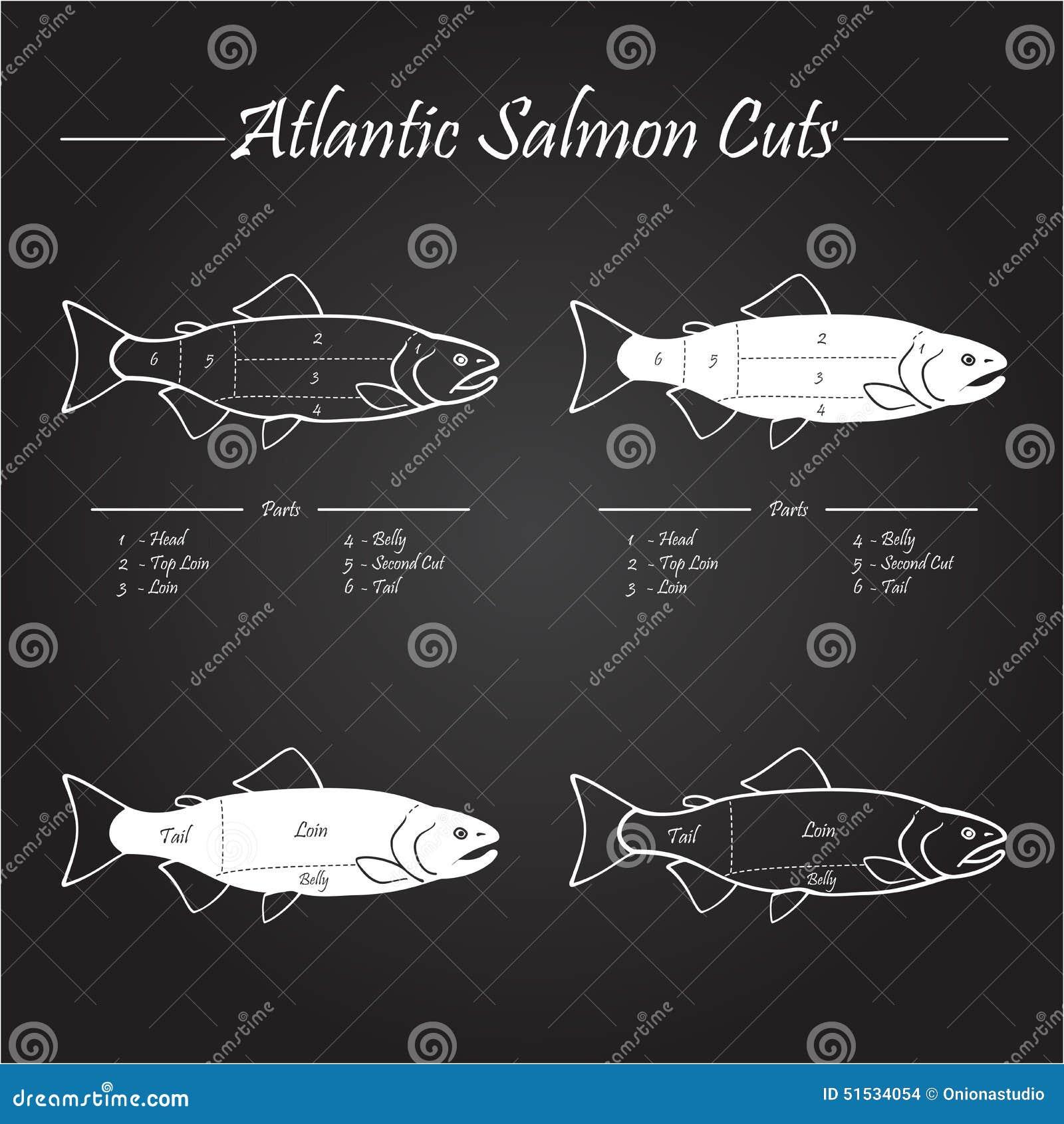 Atlantic Salmon Cuts Diagram Stock Vector