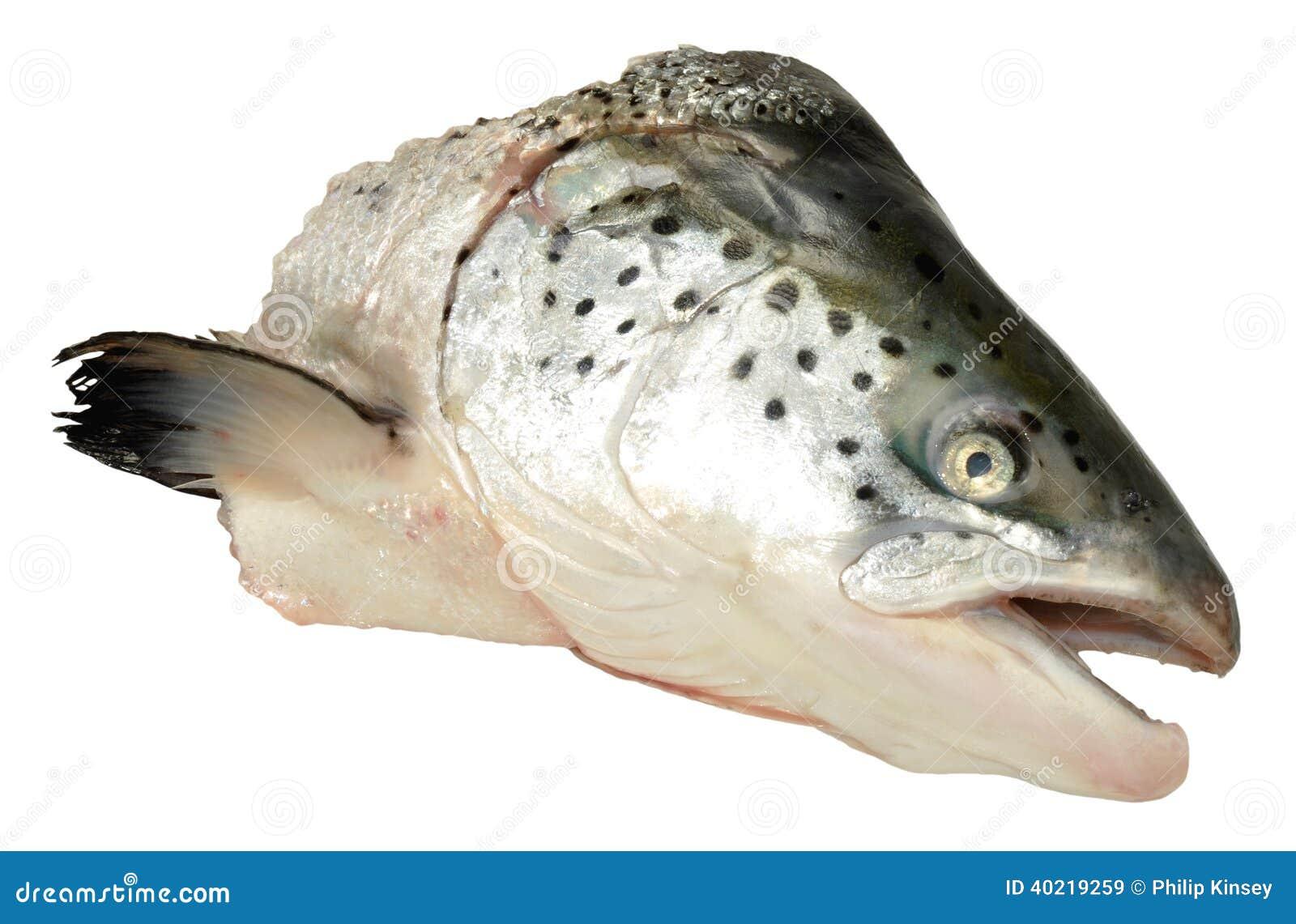 Atlantic salmon head stock photo image 40219259 for Salmon fish nutrition