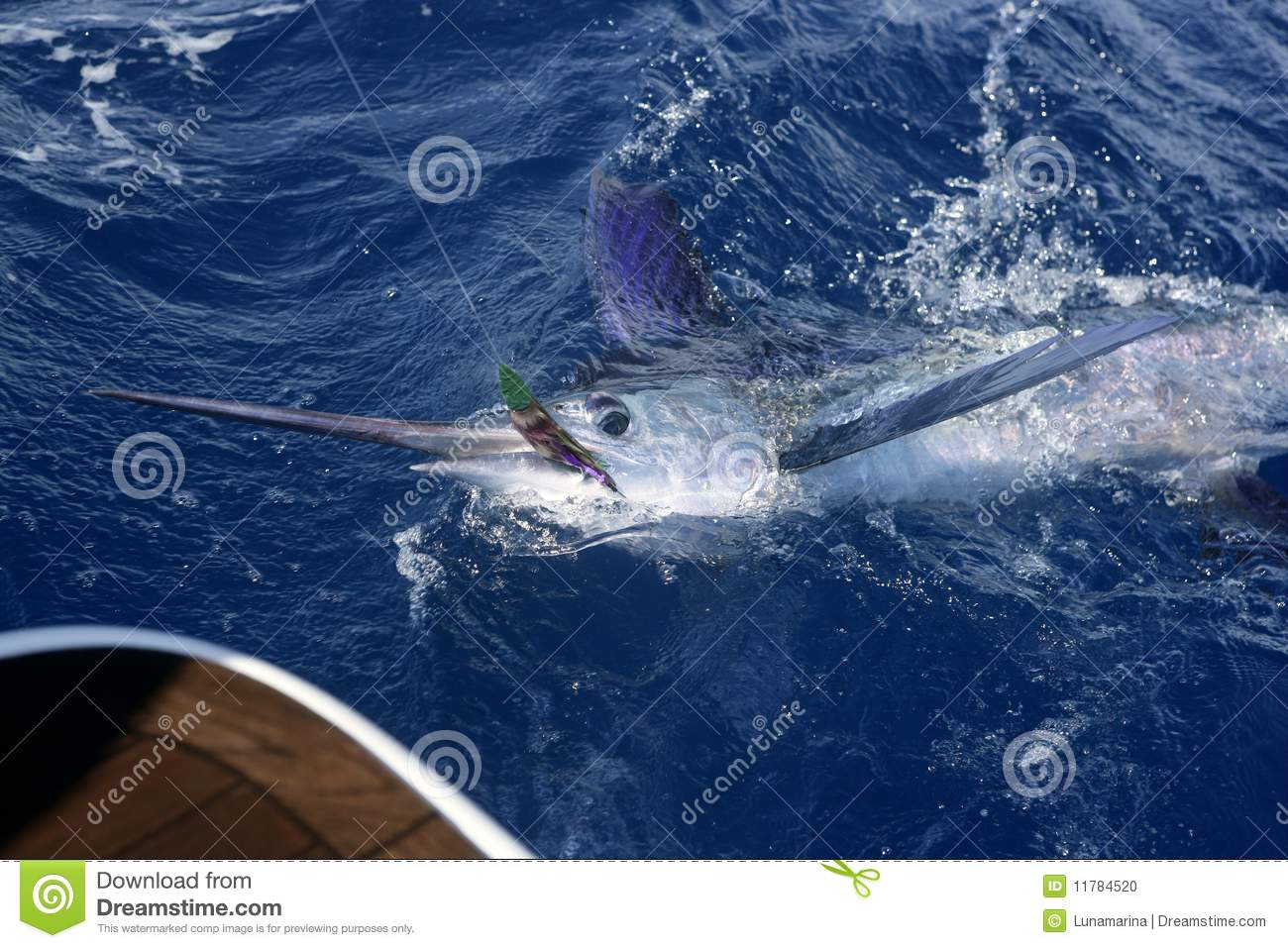 Atlantic white marlin big game sport fishing stock photo for Atlantic game fish
