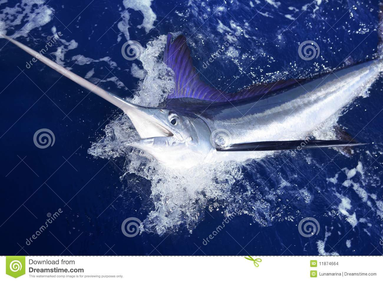 Atlantic white marlin big game sport fishing stock images for Atlantic game fish