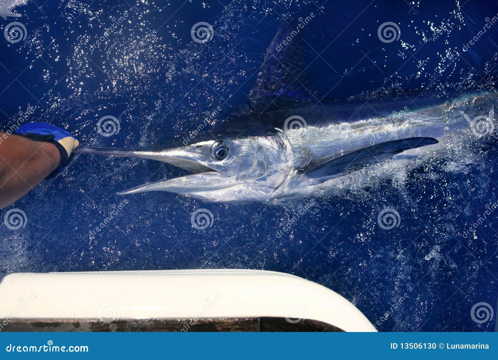 Atlantic White Marlin Big Game Sport Fishing Stock Photo ...