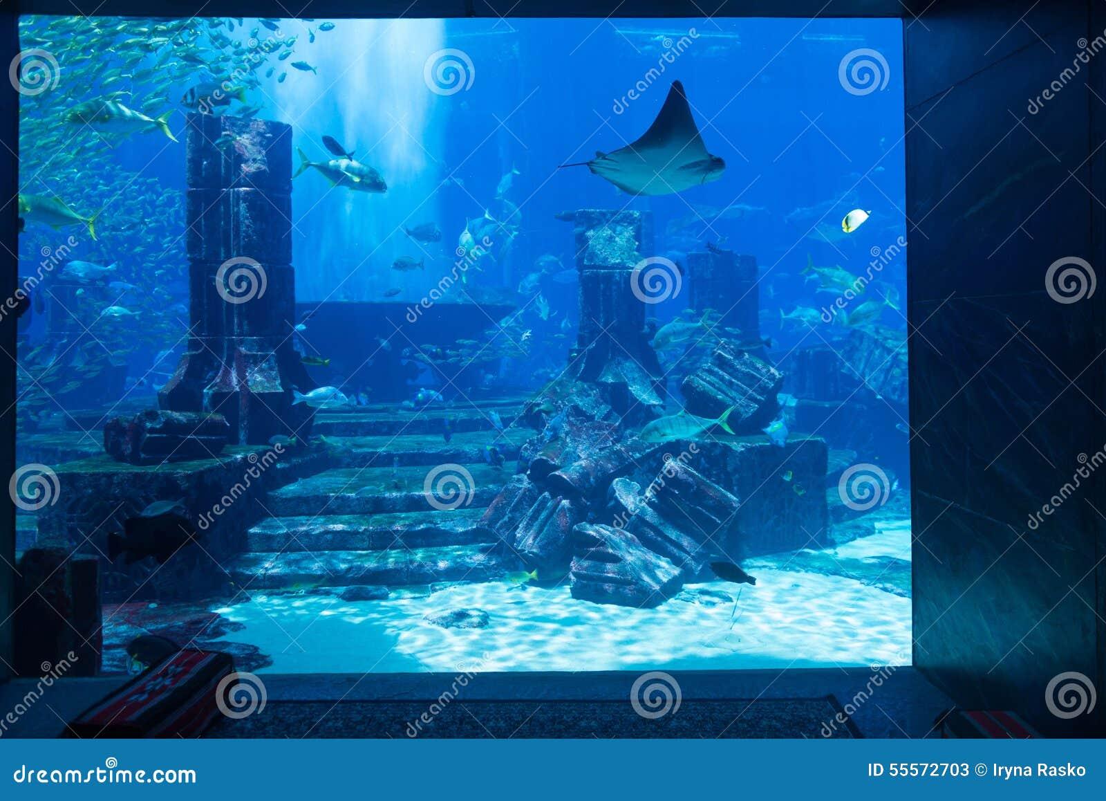 Atlantis Themed Public Aquarium Display With Realistic City Ruin Stock Photo - Image: 55572703