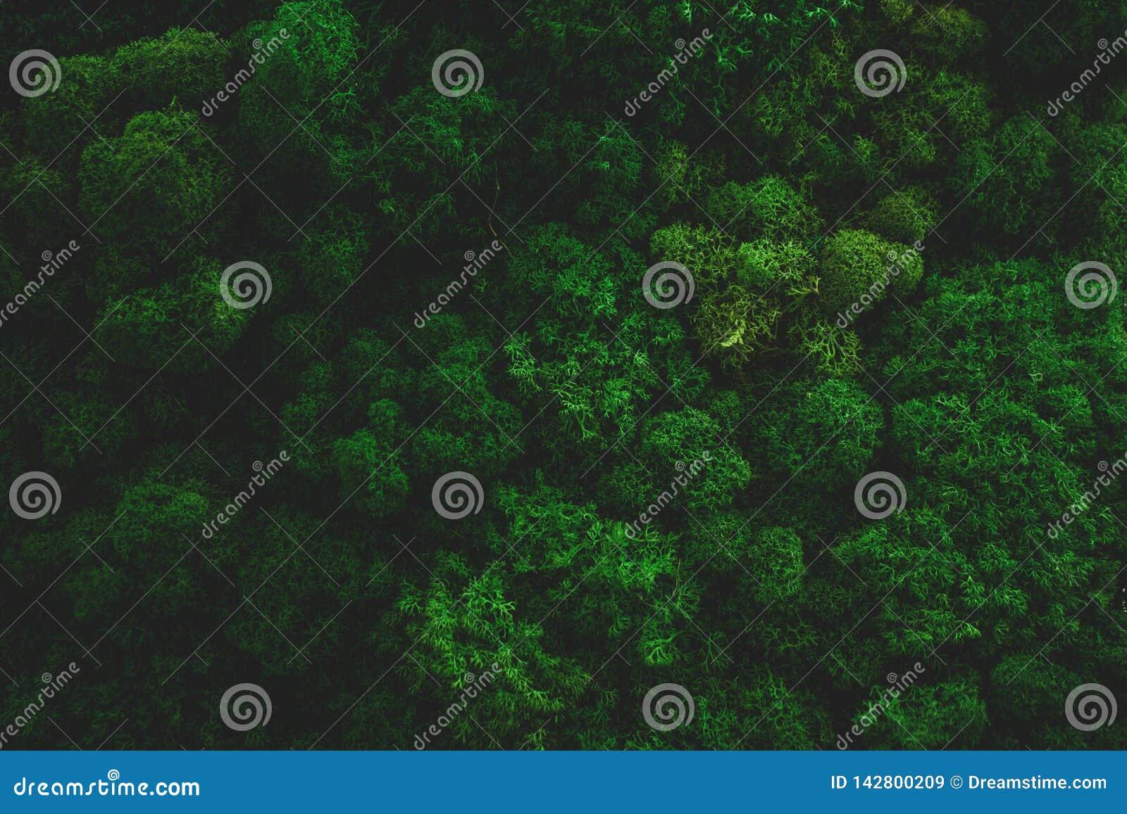 Atmosferisch Moss Background Texture