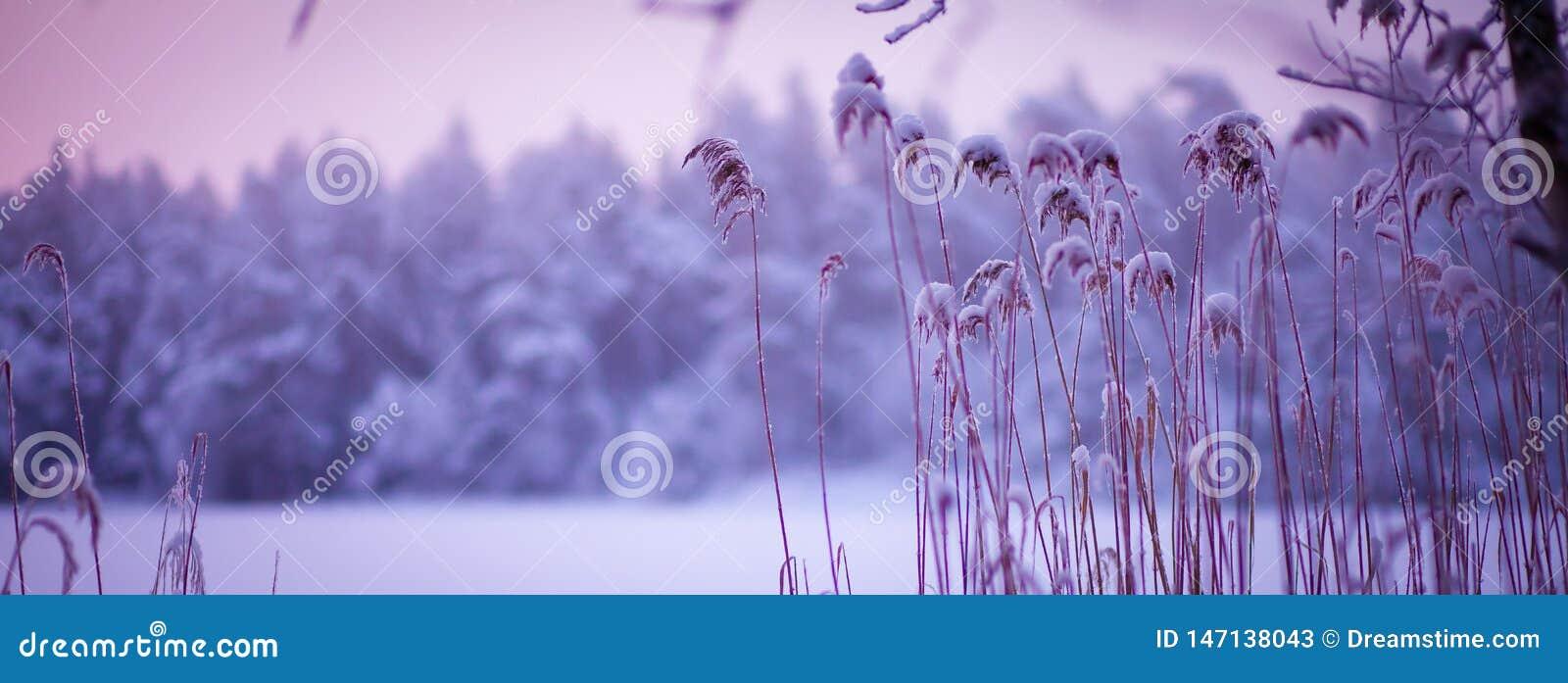 Atmosphärische Winterschneelandschaft mit purpurroten Tönen
