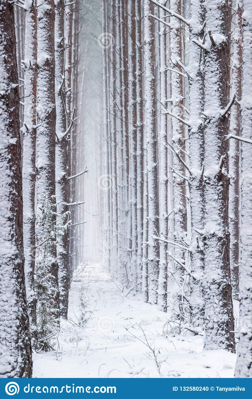 Atmosphärischer, magischer Weihnachtswinterwald voll des weißen Schnees
