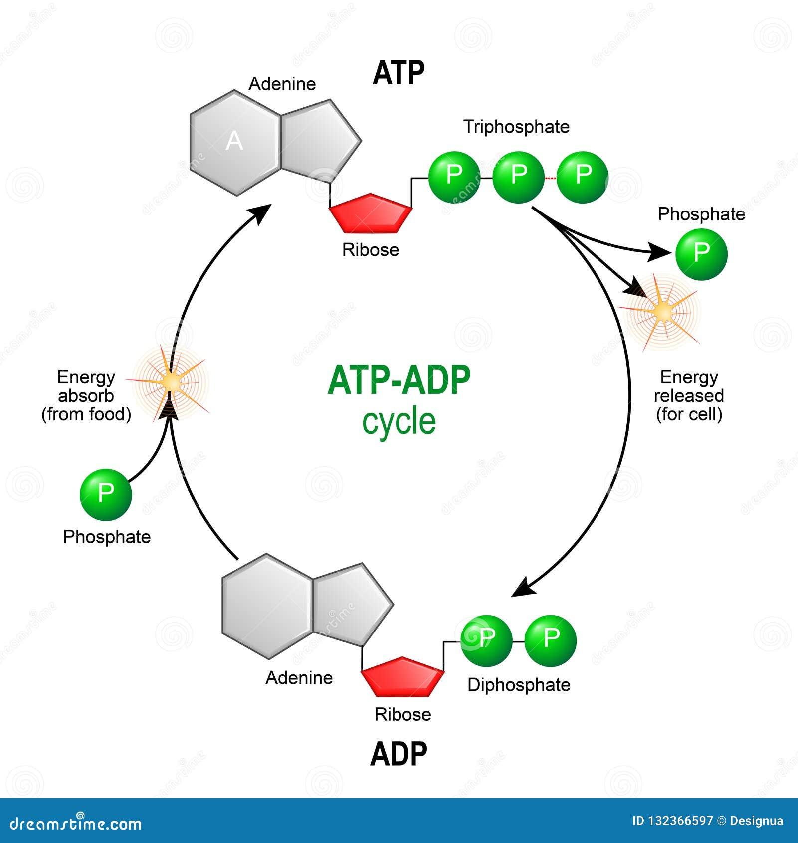 ADP - ADP - JapaneseClass.jp