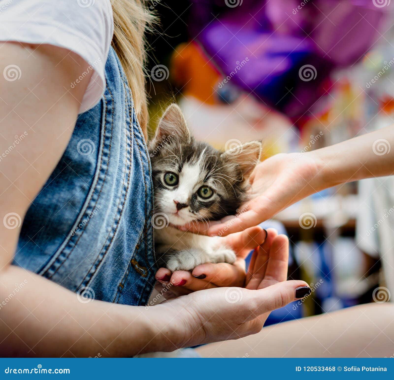 Att bry sig för smekning för hand för husdjurbarn` s ett litet strimmig kattkattungesammanträde