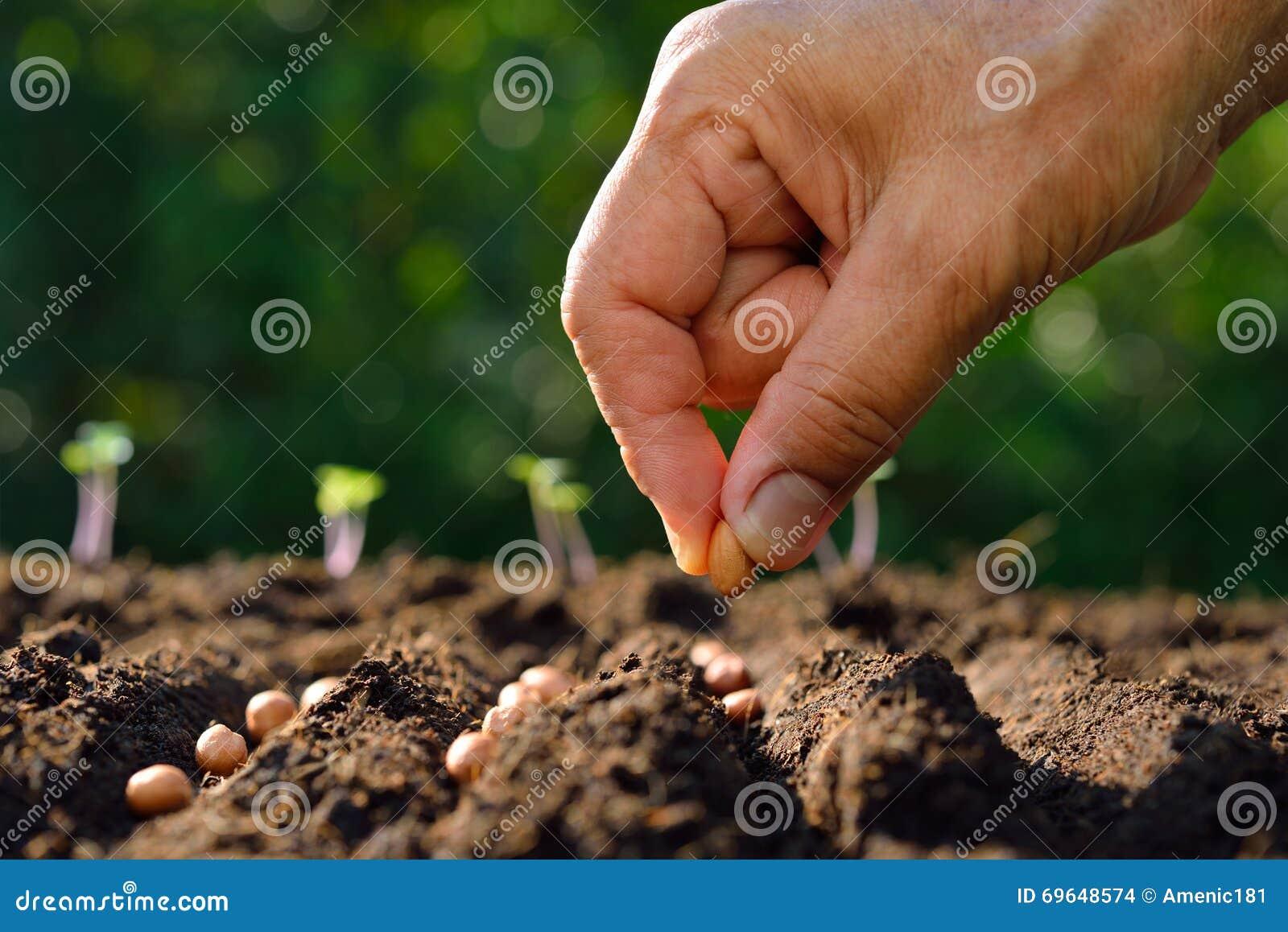 Att plantera kärnar ur
