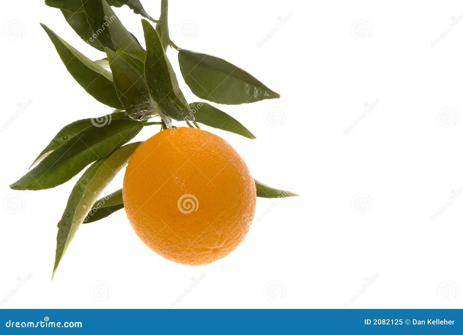 Att växa orange single