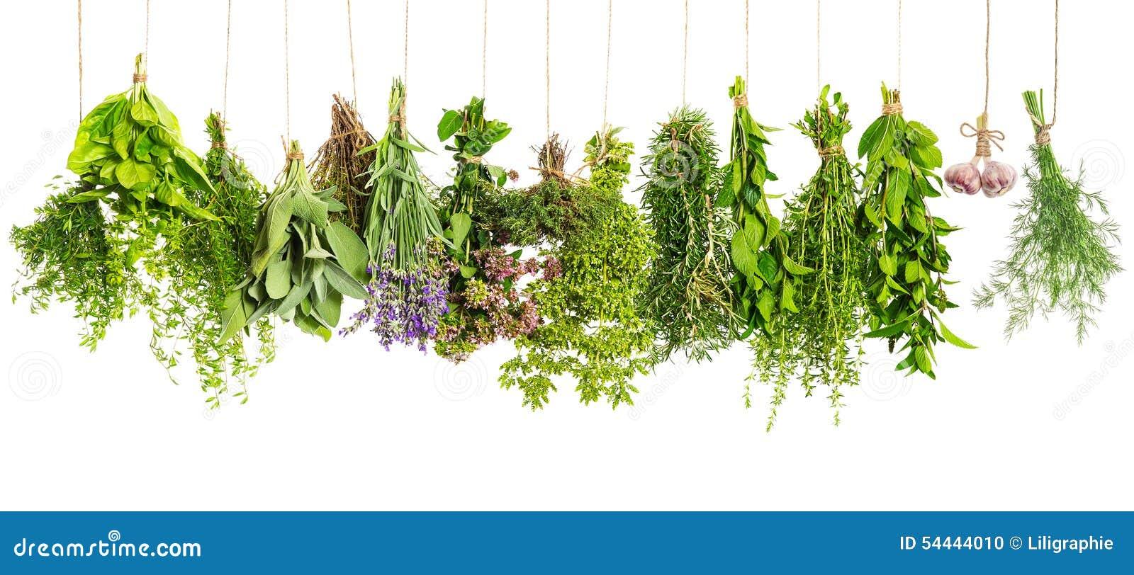 Attaccatura delle piante aromatiche isolata su bianco for Piante di lamponi acquisto