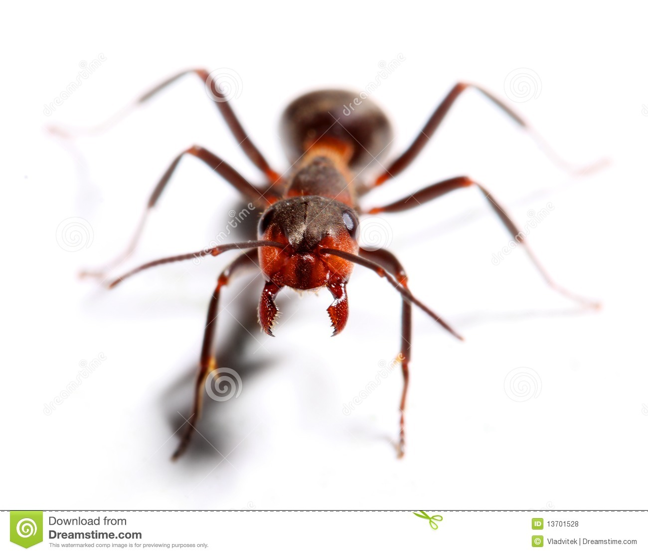 Attacking Big Red Ant. Royalty Free Stock Photos - Image ...