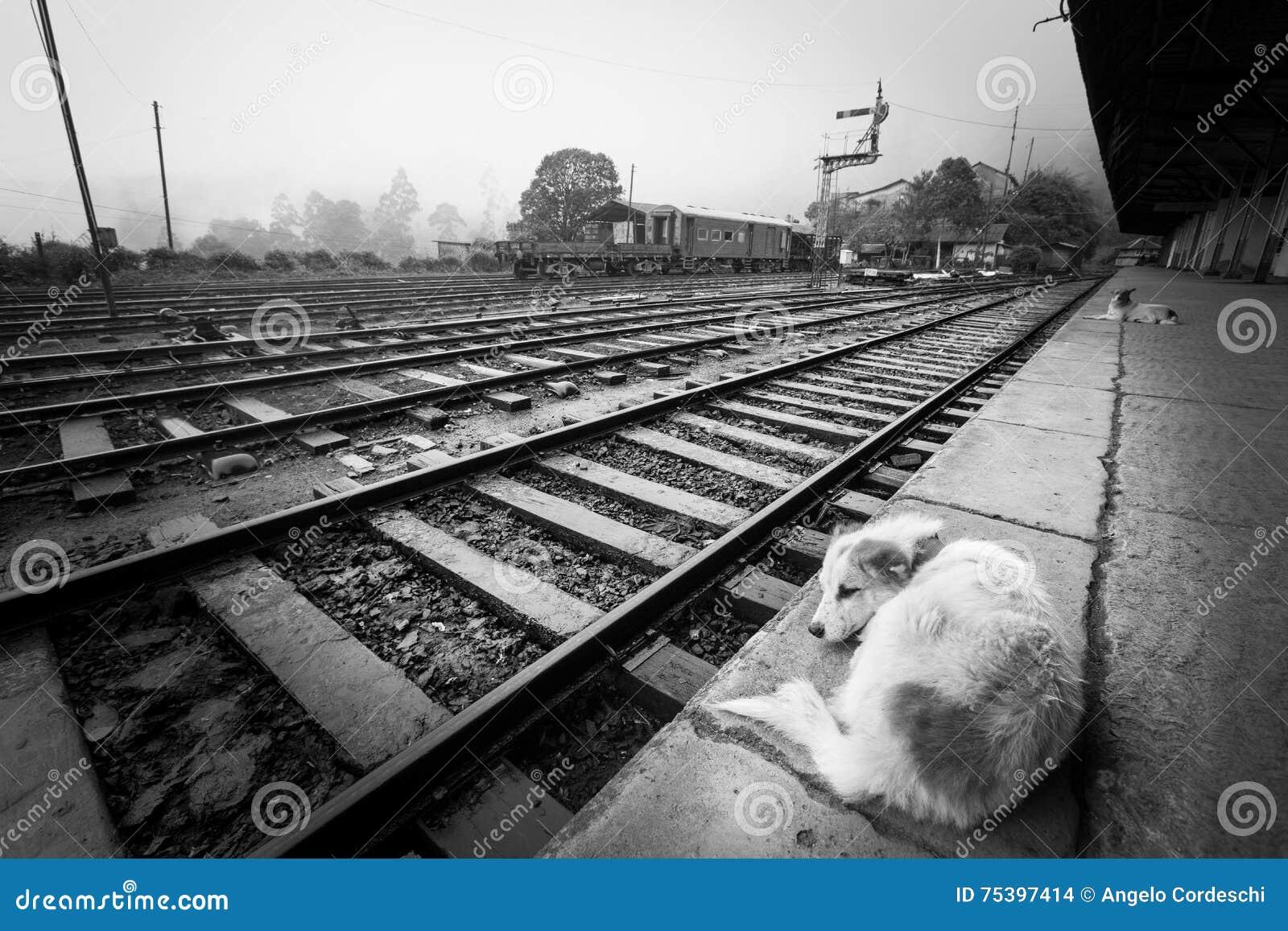 Attente du train Solitude de la station