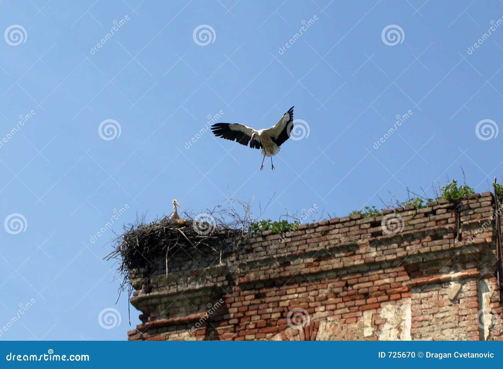 Atterrissage de cigogne dans un emboîtement