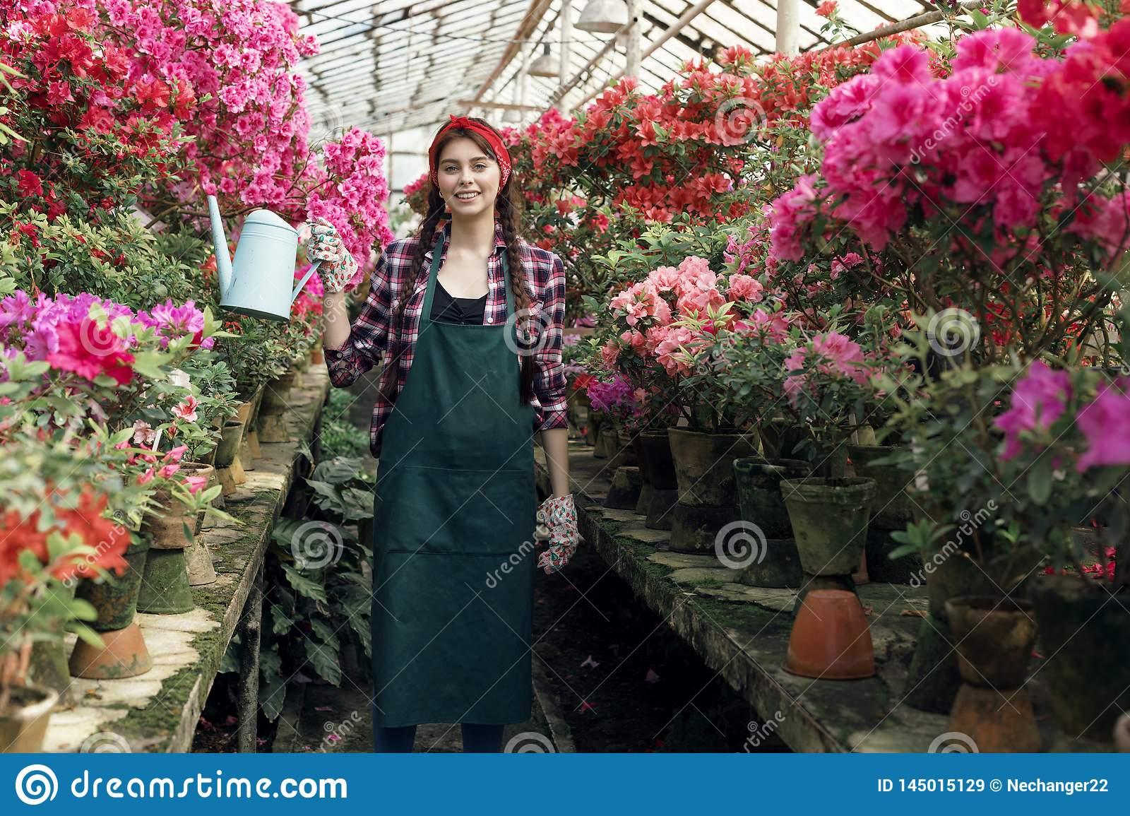 Attractive young woman gardener in work clothes with red headband watering colorful flowers in greenhouse