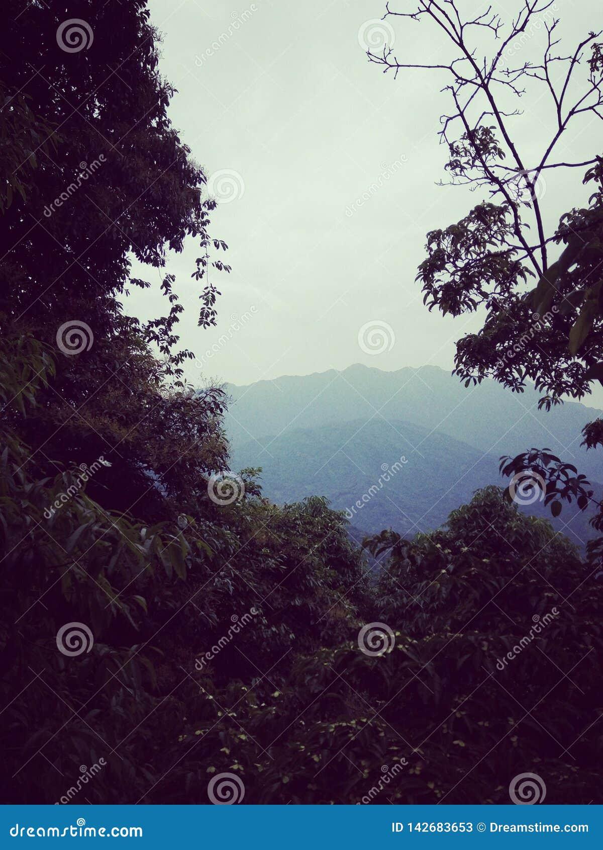 Attrazioni, montagna del qingcheng di Chengdu - della Cina