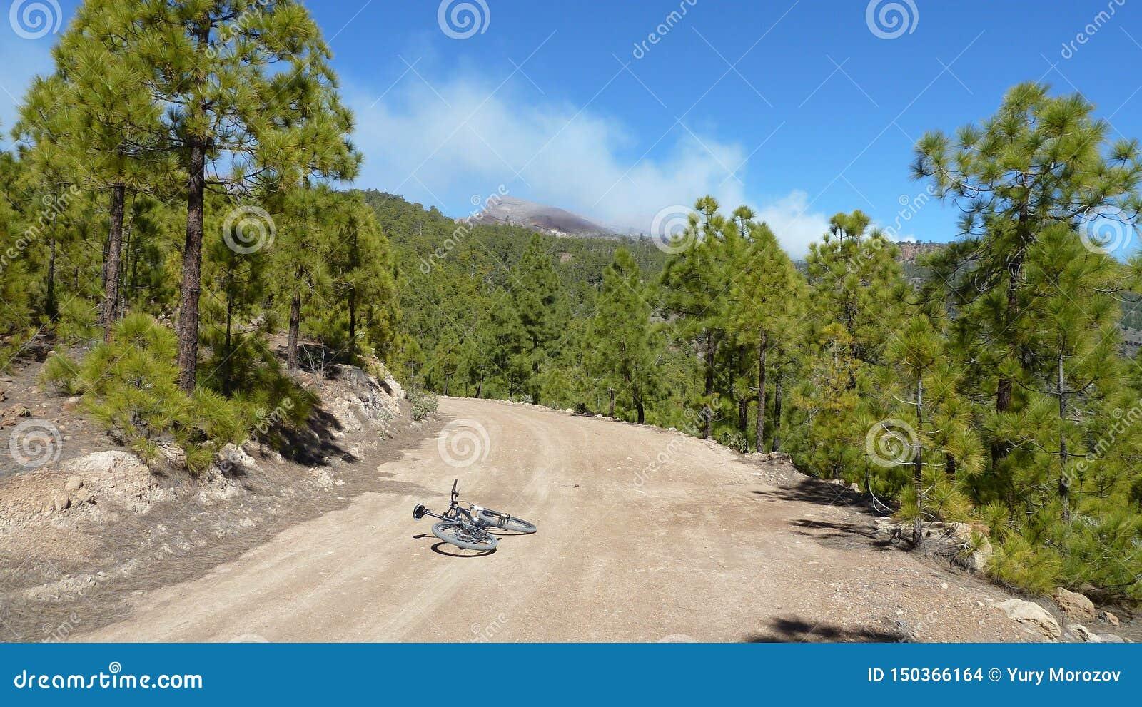 Aturdir las nubes y paisaje del bosque de la montaña Pinos a lo largo de la carretera nacional con el bycicle del photografer Cie