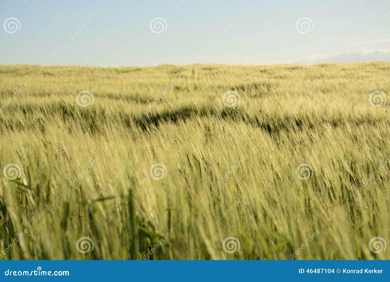 Außerhalb der Stadt - ländliche Landschaft - ein Feld