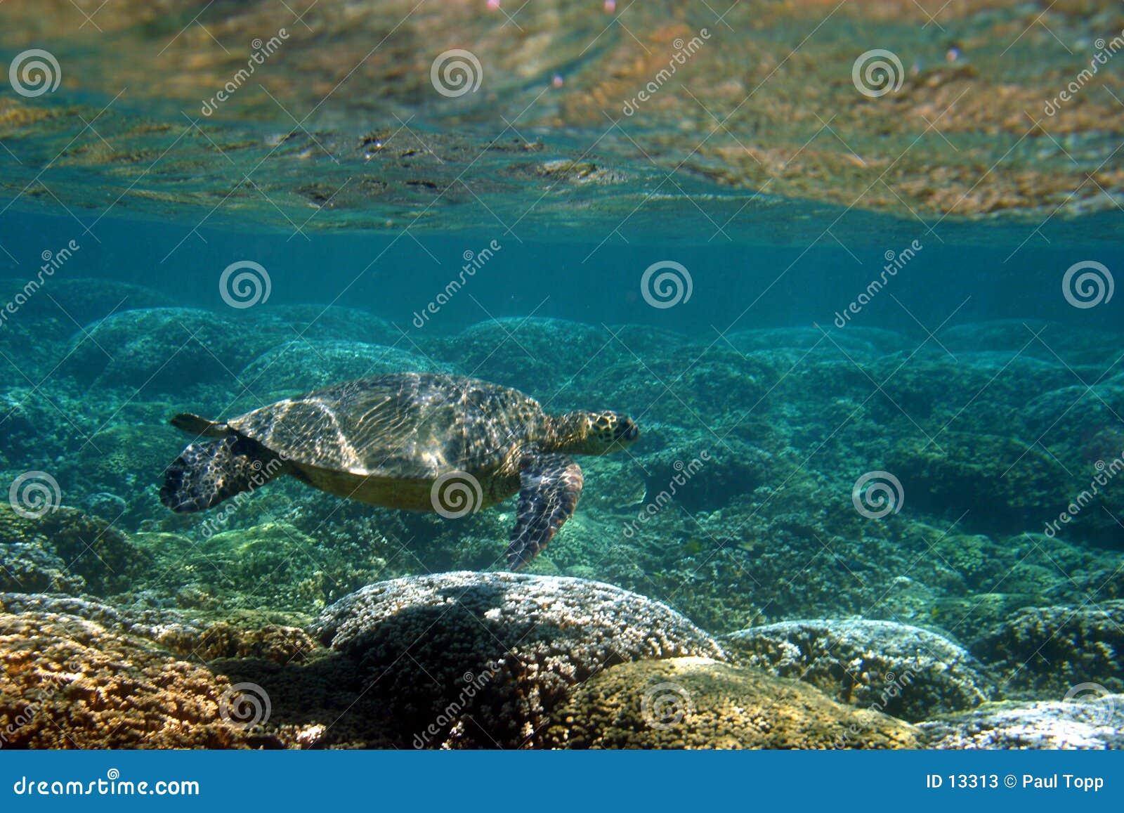 Au-dessous de la surface