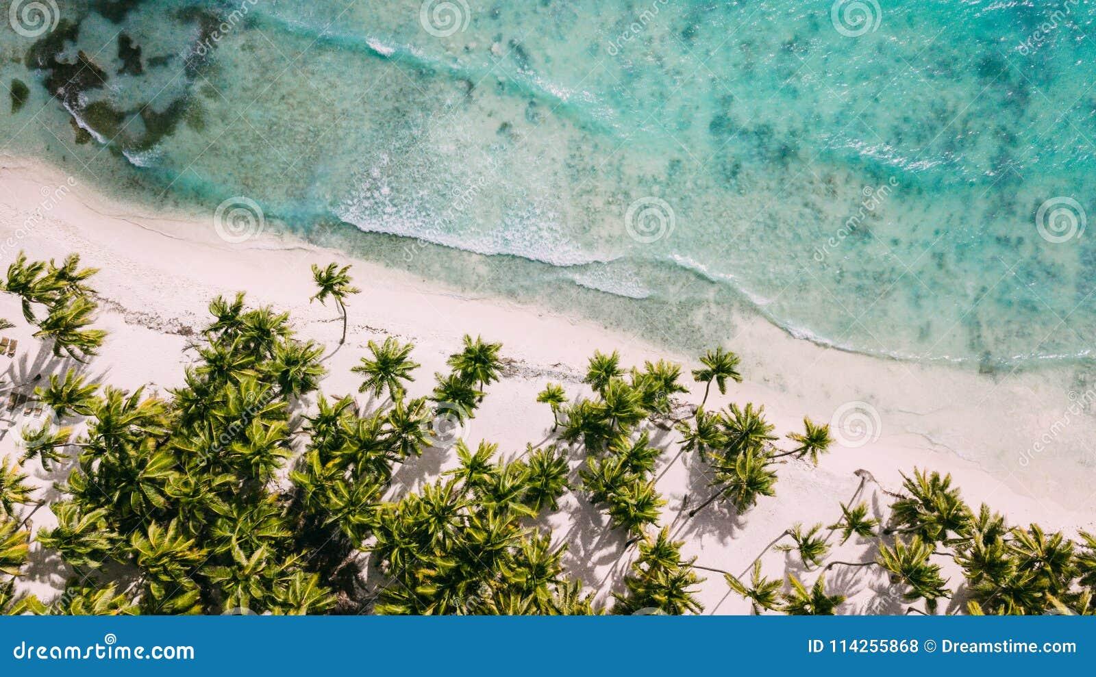 Au-dessus de la plage blanche Palmiers et eau