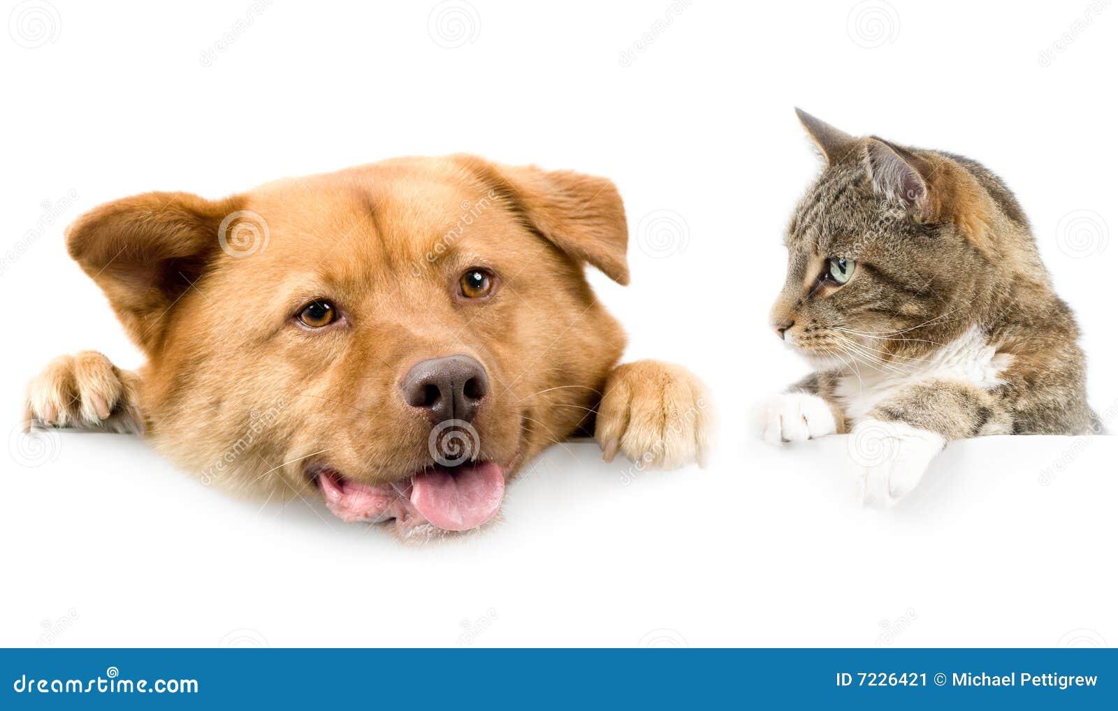 au dessus du blanc de crabot de chat de drapeau image stock image du chien above 7226421. Black Bedroom Furniture Sets. Home Design Ideas