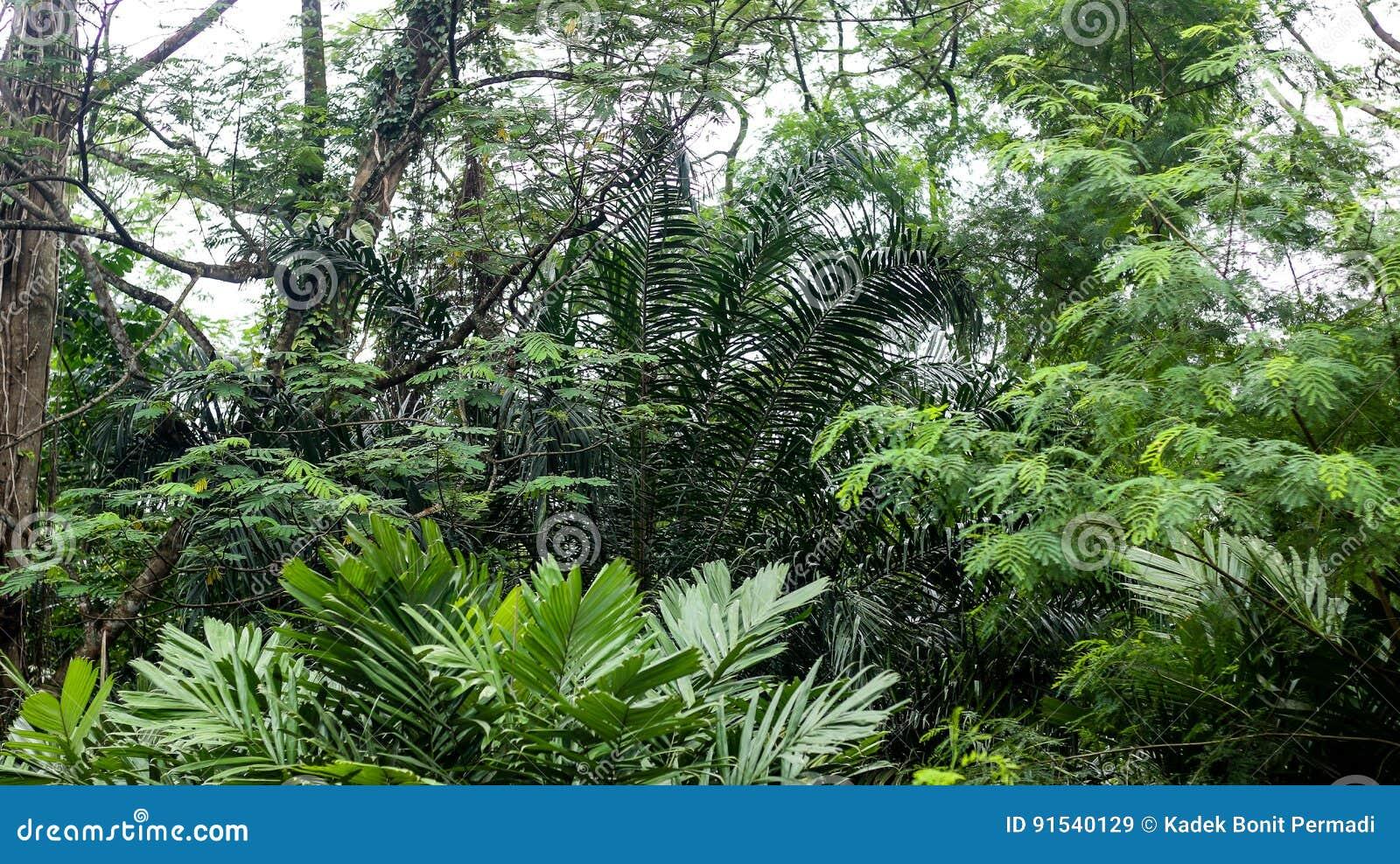 Au milieu de la forêt tropicale tropicale profonde