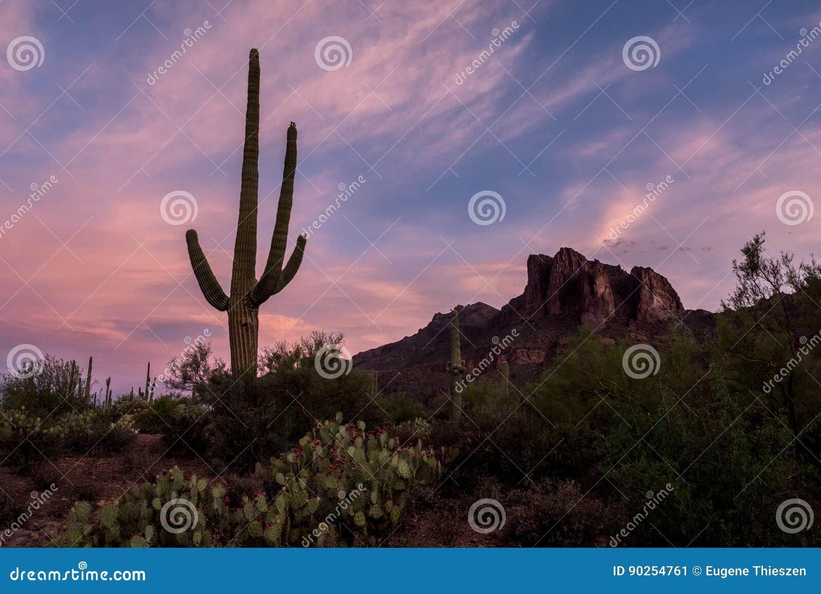 Aube de désert