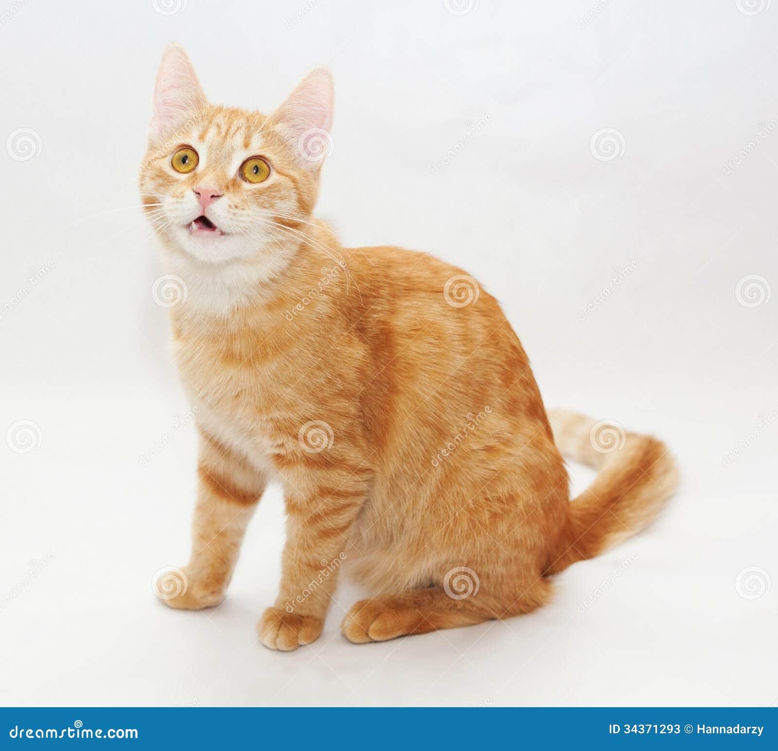 telling cat video