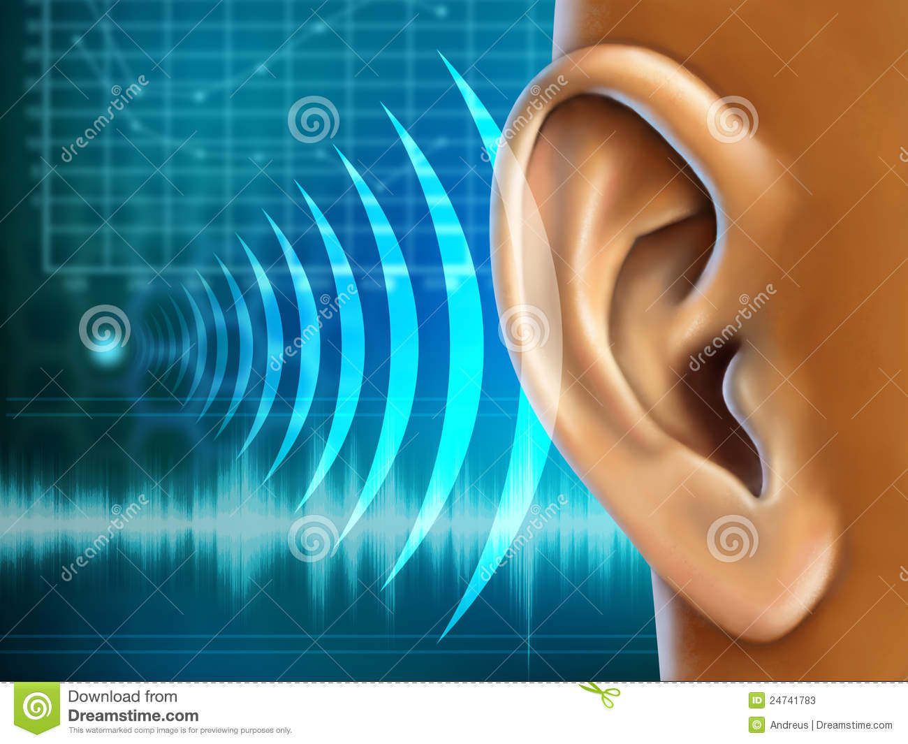 Drawing human ear royalty free stock photography image 25570937 - Audiometrie Stock Foto S