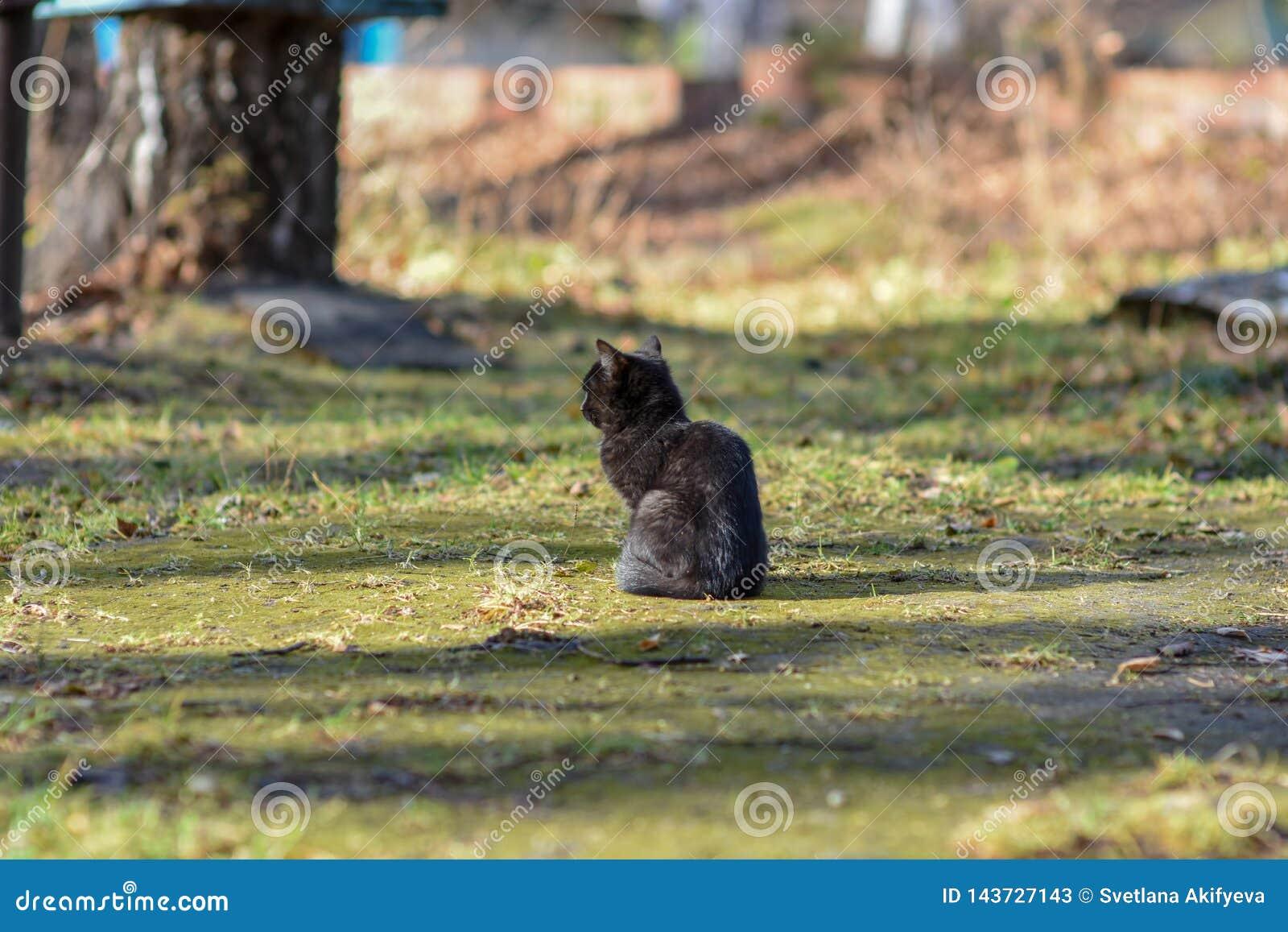 Auf Erde hat Katze Nahrung und schaut vorwärts zu