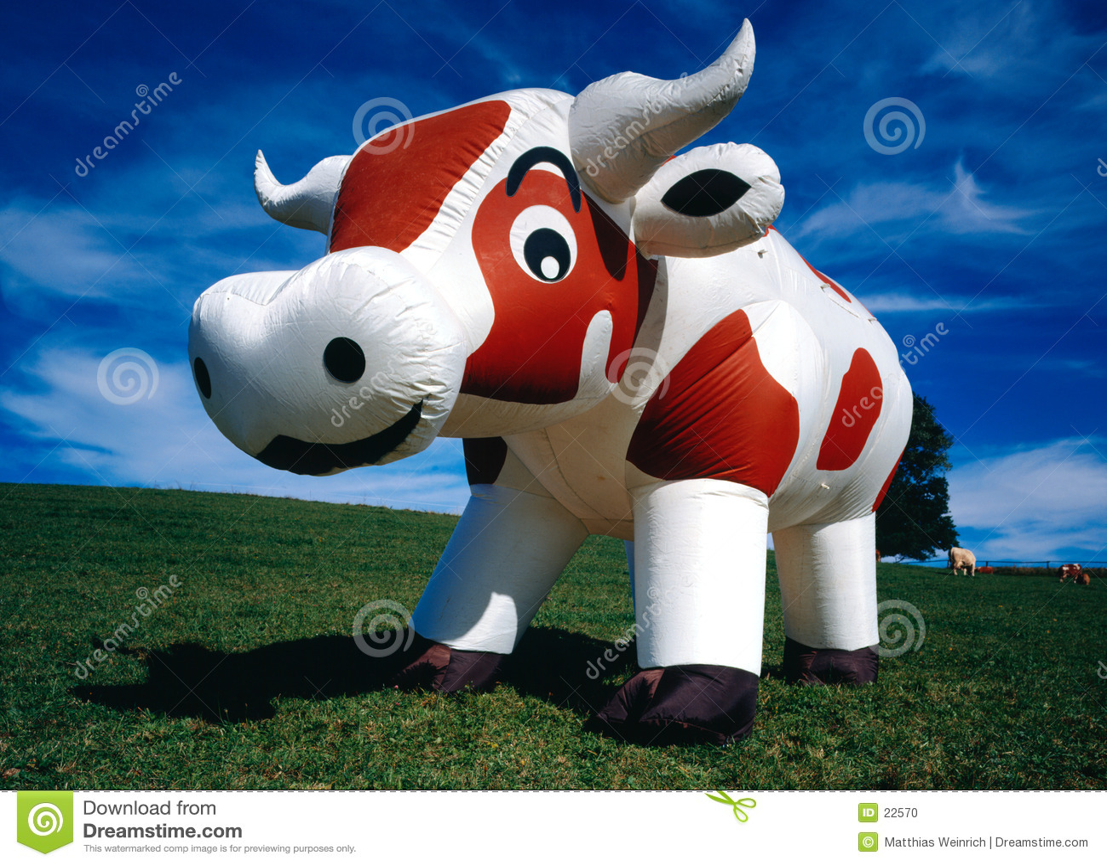 Aufblasbare Kuh