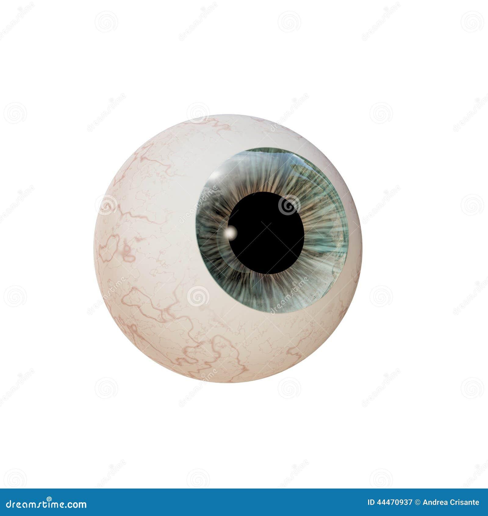 Augapfel stock abbildung. Illustration von anatomie, retina - 44470937