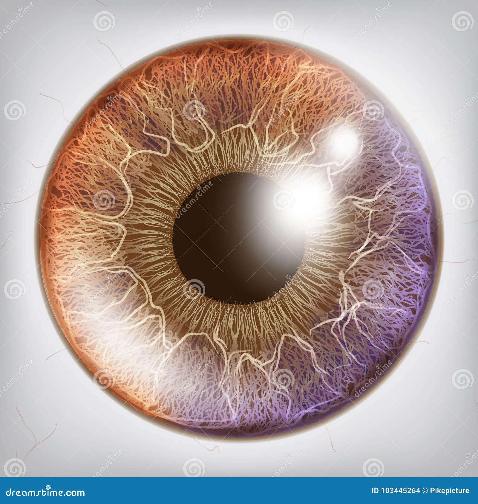 Auge Iris Realistic Vector Anatomie-Konzept-Illustration Vektor ...