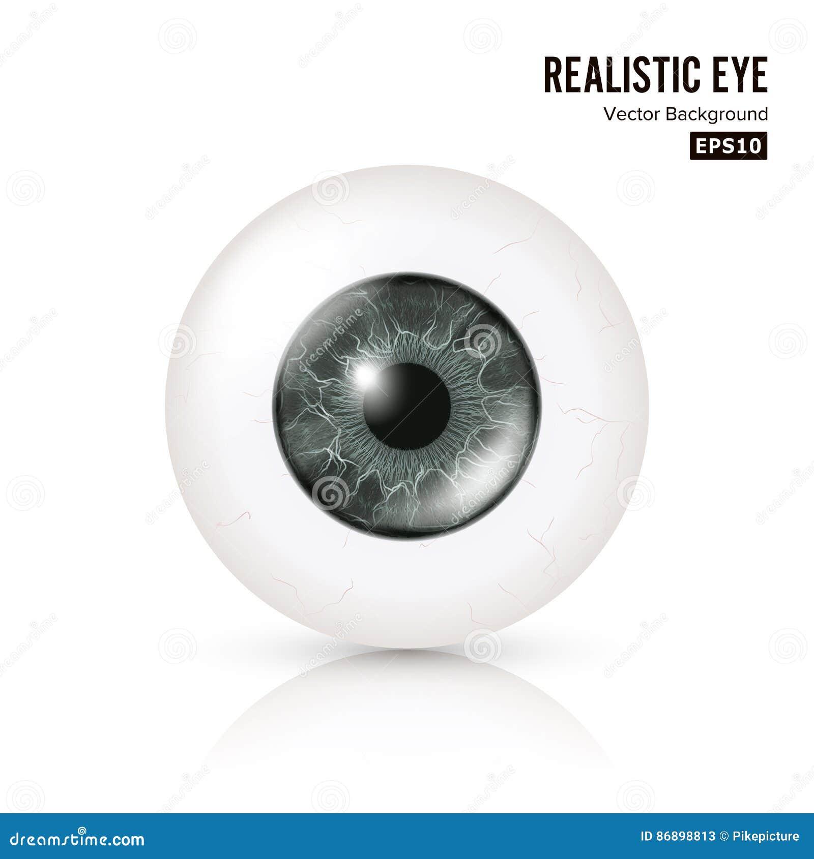 Auge realistisch Vector Illustration menschlichen glatten Foto 3d Rrealistic-Auges mit Schatten und Reflexion Front View