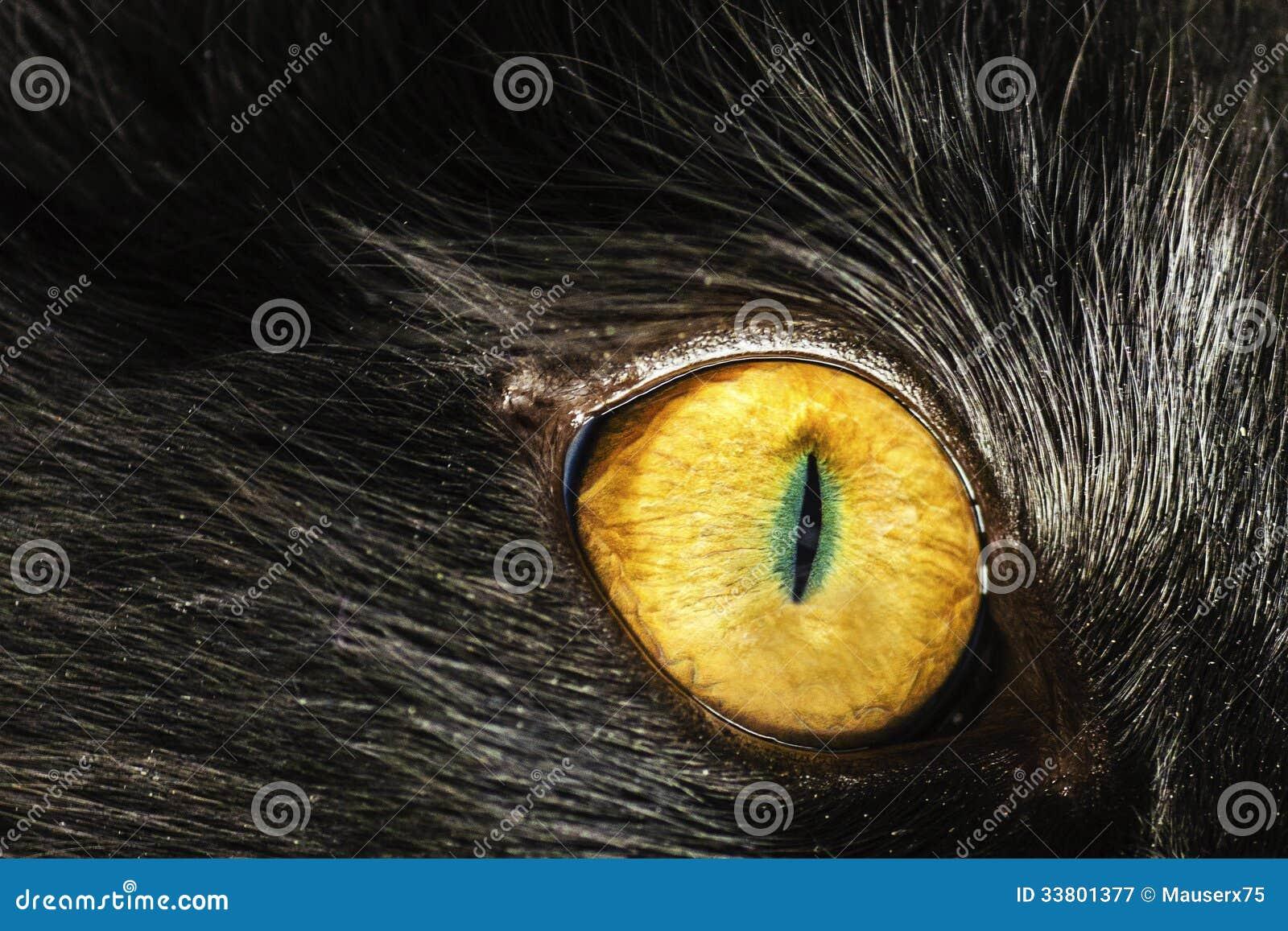 Augen-Katze