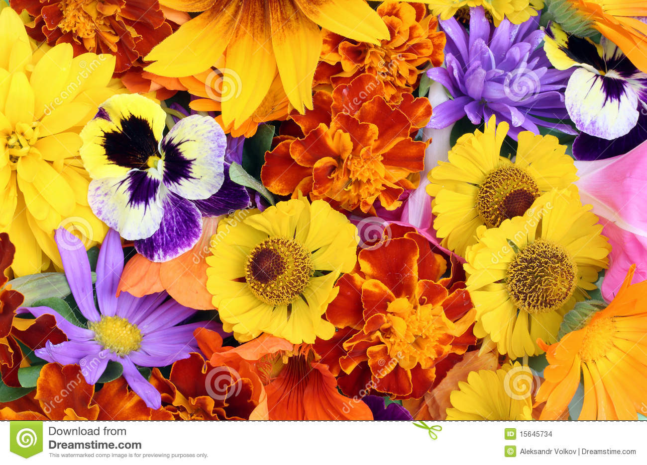 August Flowers Mix Stock Image
