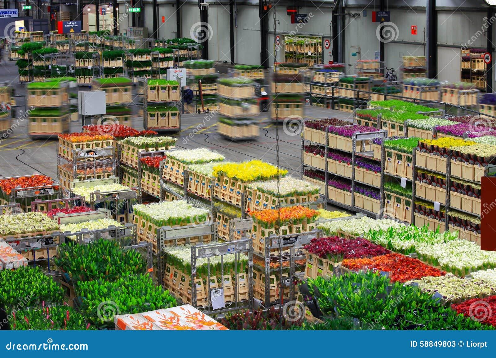 Auktionsboden Aalsmeers an der FloraHolland-Blumenauktion