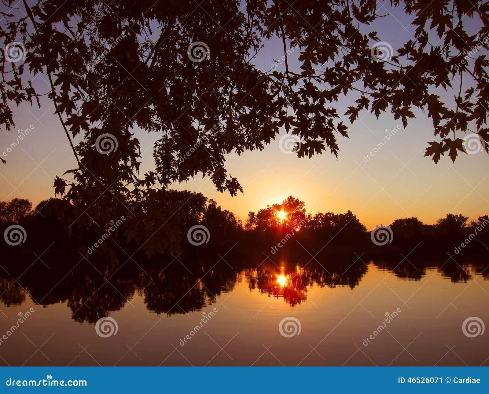 Aumento scenico variopinto del sole di tramonto sulle for Piante dello stagno