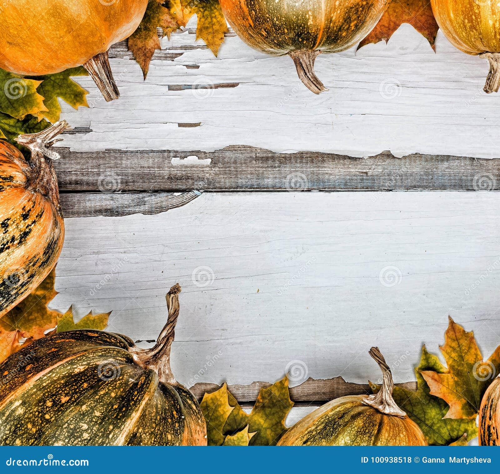 Aunumnbakgrund låter vara livstid över still tacksägelse trä Pumpor på en vit träbakgrund Fritt avstånd för text ovanför sikt