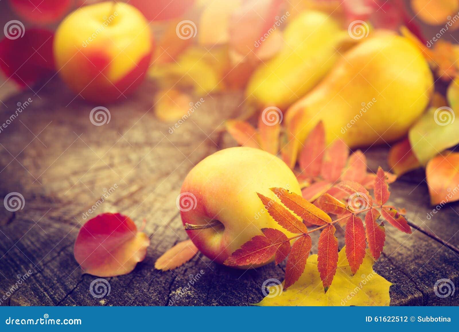 Aunumnbakgrund låter vara livstid över still tacksägelse trä Sidor, äpplen och päron för höst färgrika