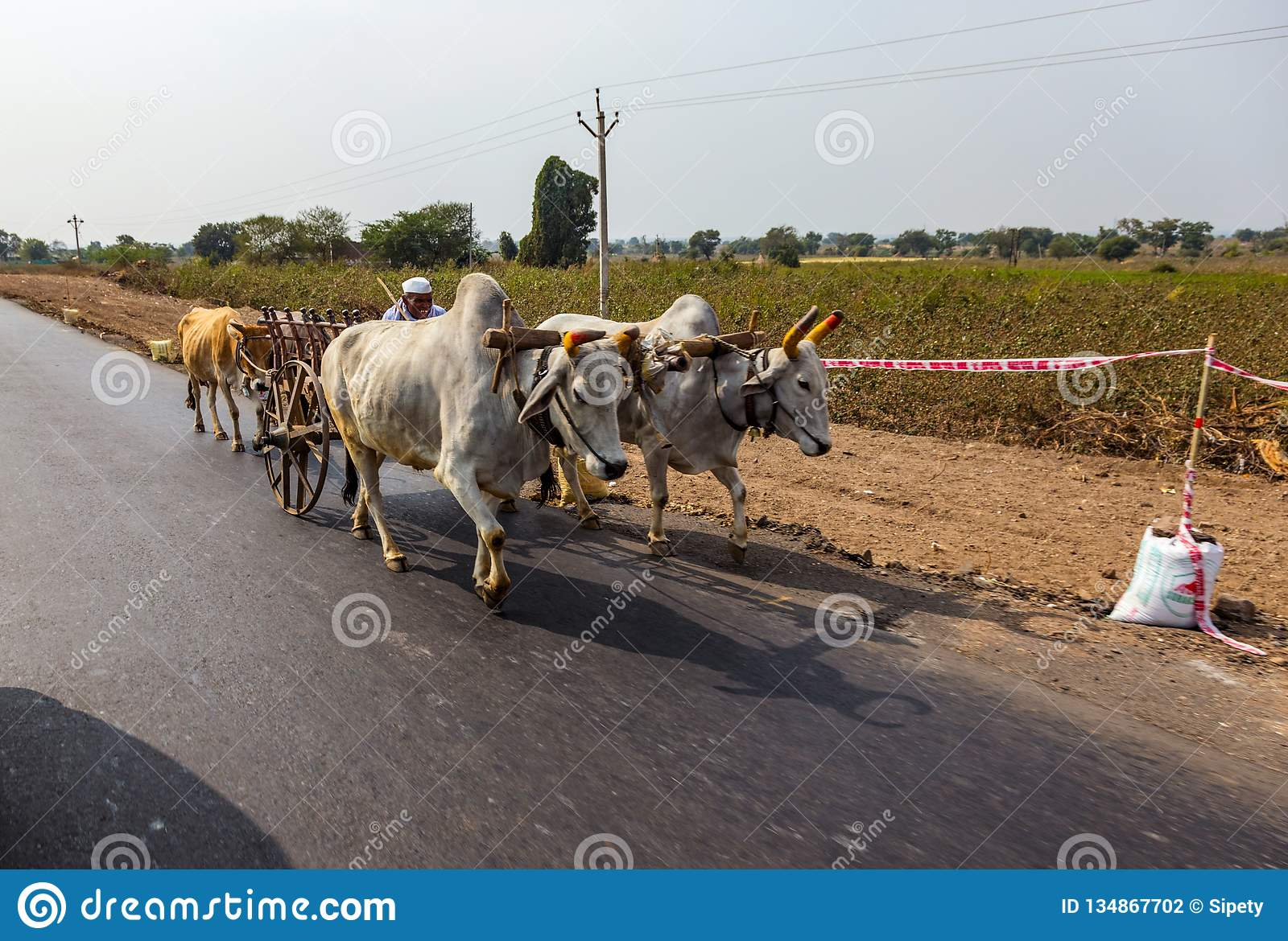 AURANGABAD, INDIA - JANUARY 14, 2018: A traditional Indian man drive on a cart drawn by two white bulls