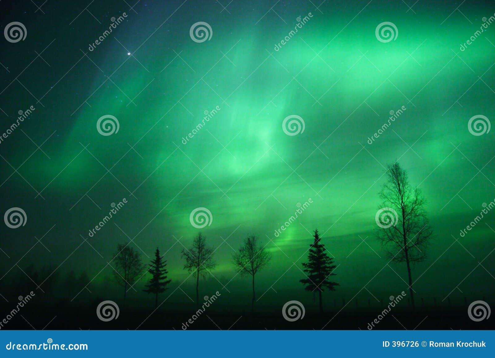 Aurora arc over tree line