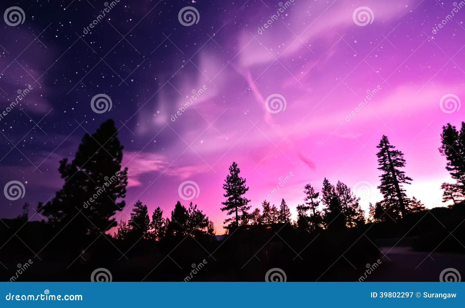 Aurora borealis da aurora boreal sobre árvores