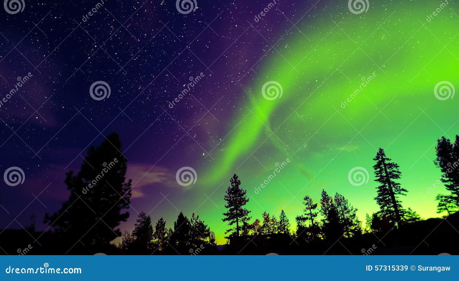 Aurora borealis de lumières du nord au-dessus des arbres