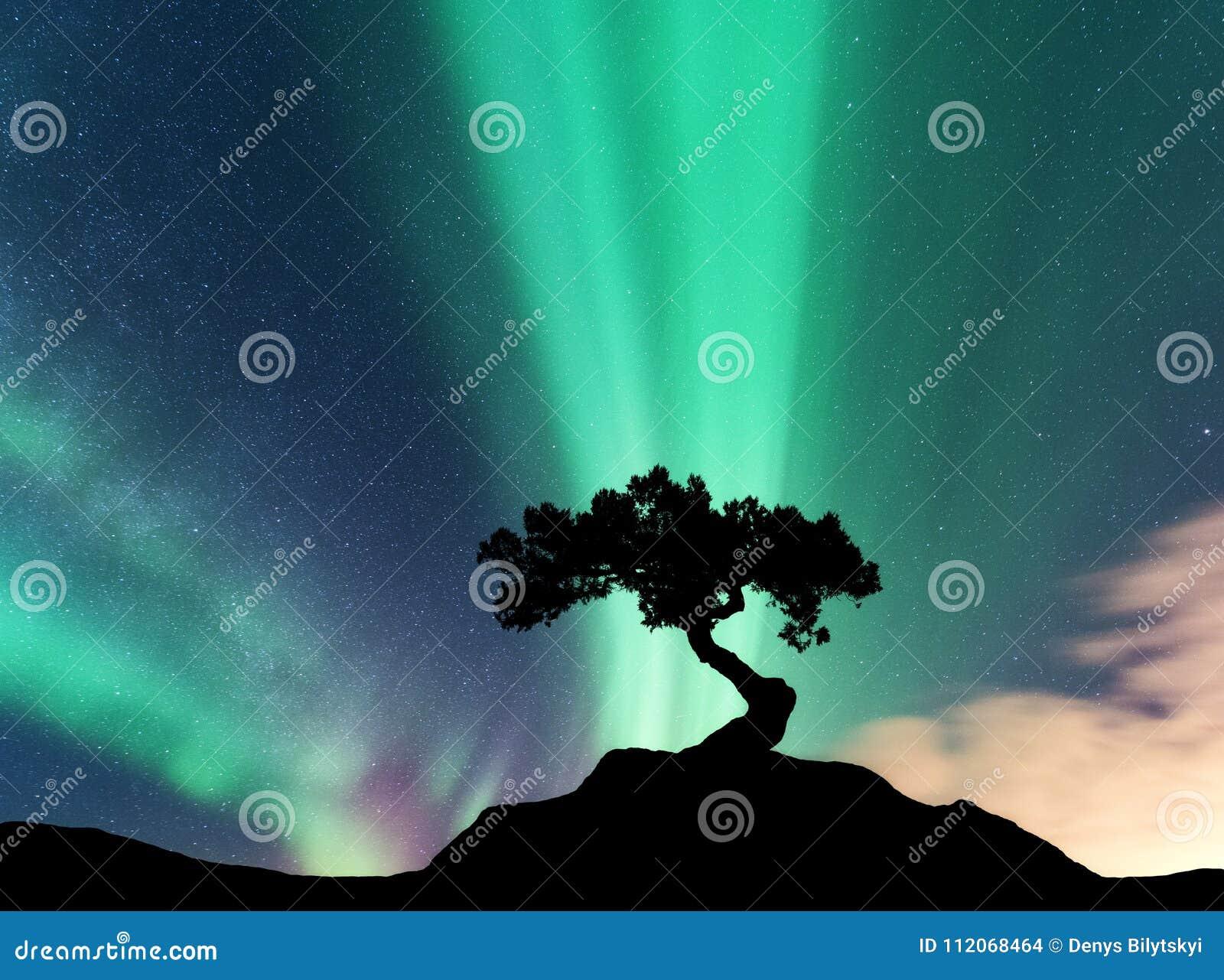 Aurora borealis en silhouet van een boom op de berg