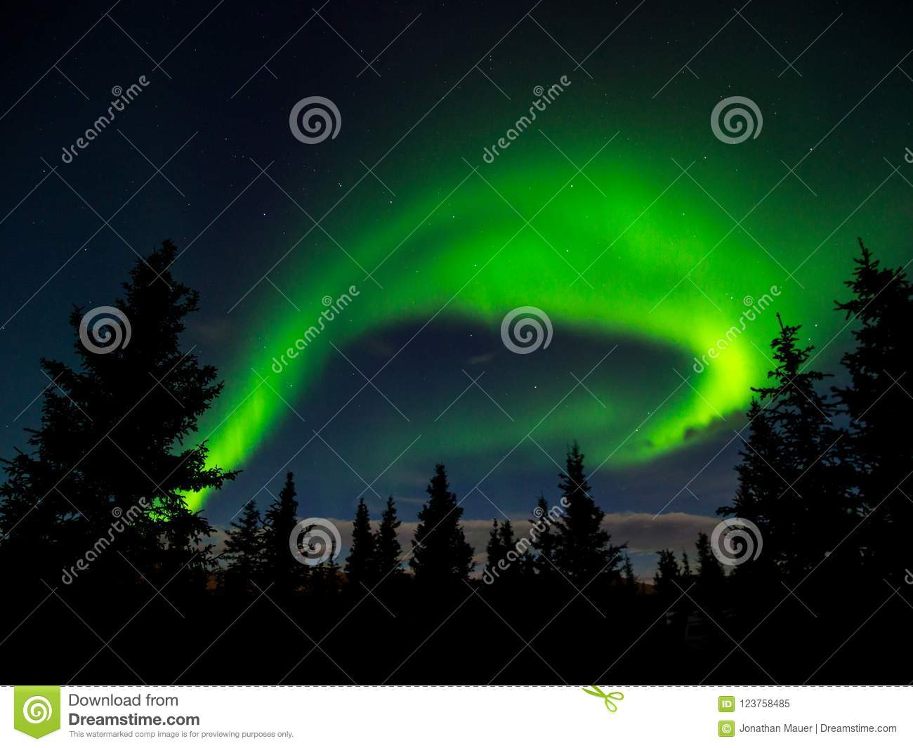 Aurora Borealis Norther Lights over Forest