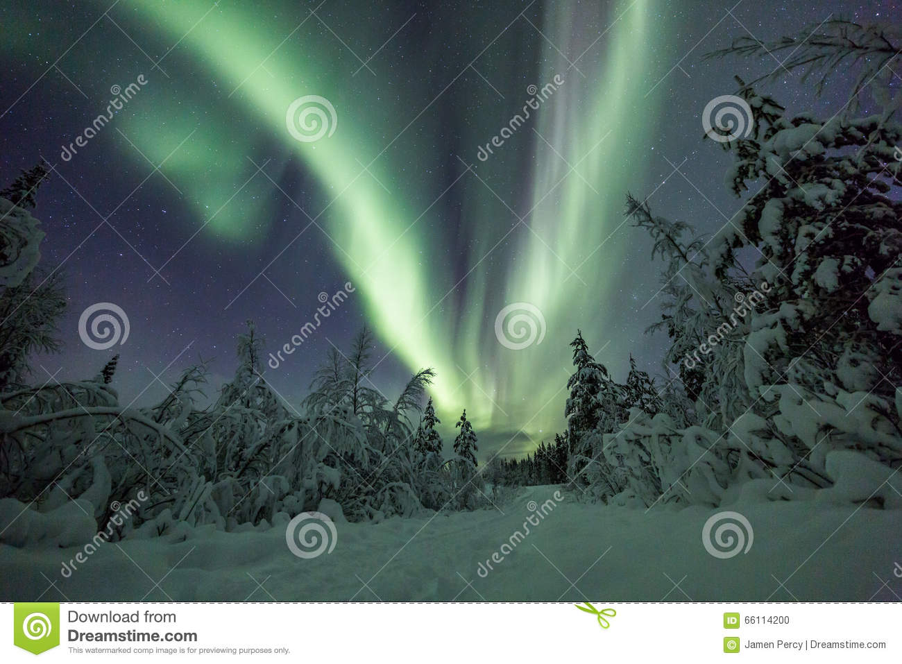 Download Aurora Borealis (Northern Lights) In Finland, Lapland Forest Stock  Photo   Image