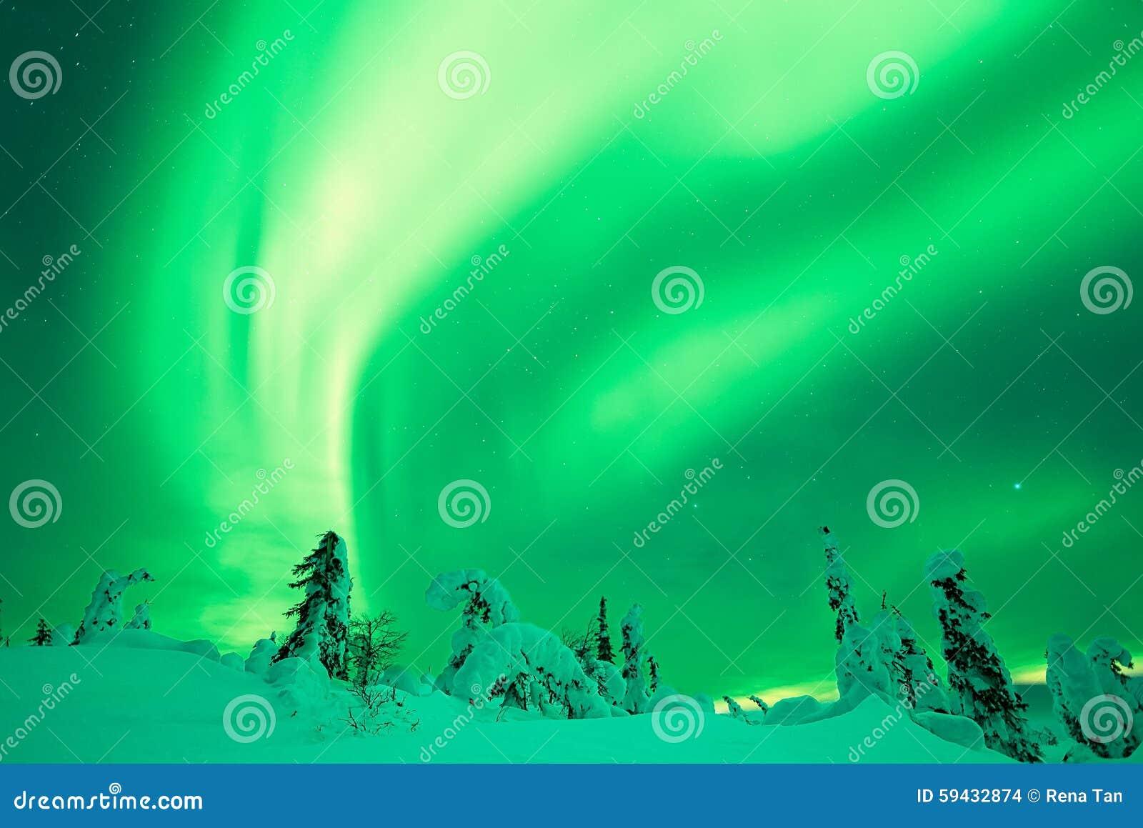 Aurora Borealis with snowy trees