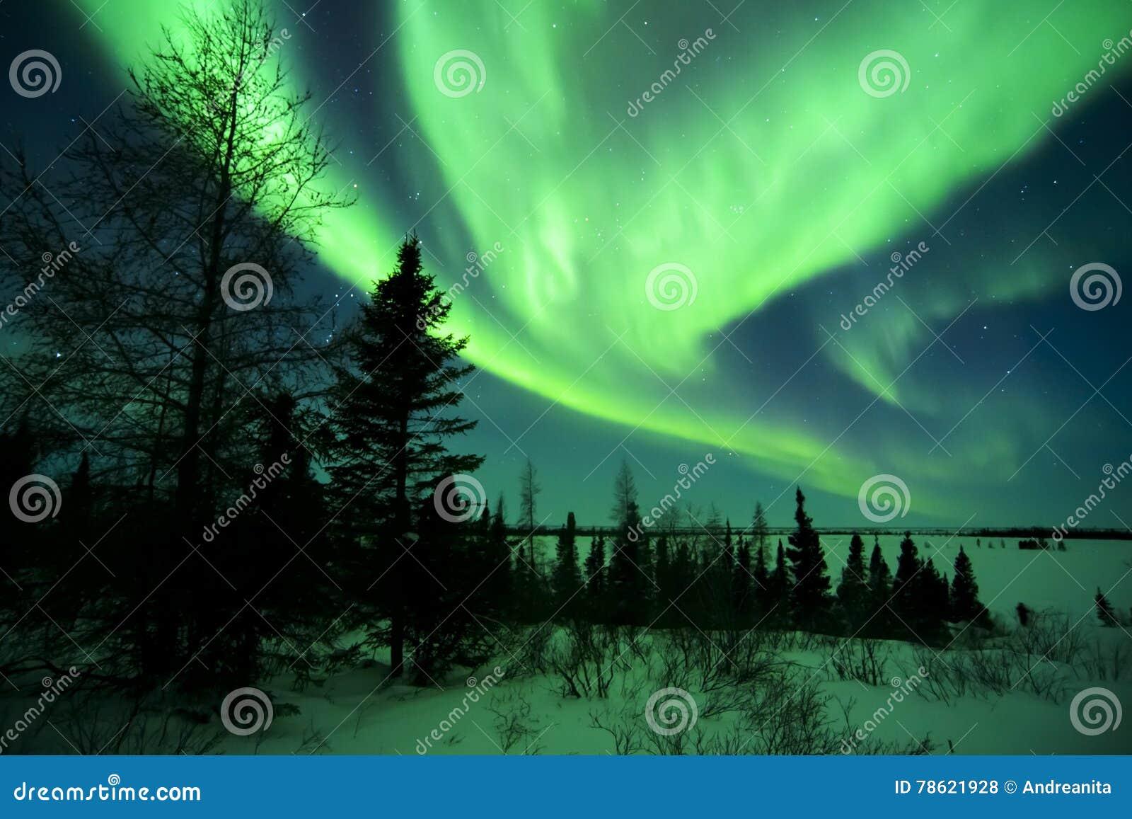Aurora Borealis sopra la tundra