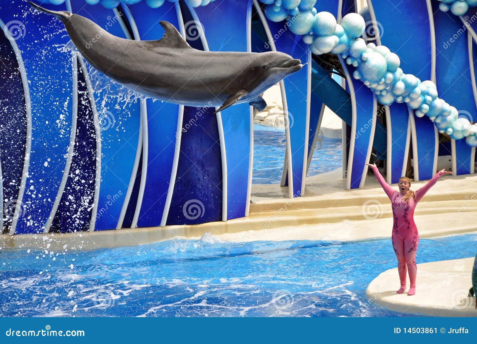 Ausführung des Delphins und des Kursleiters