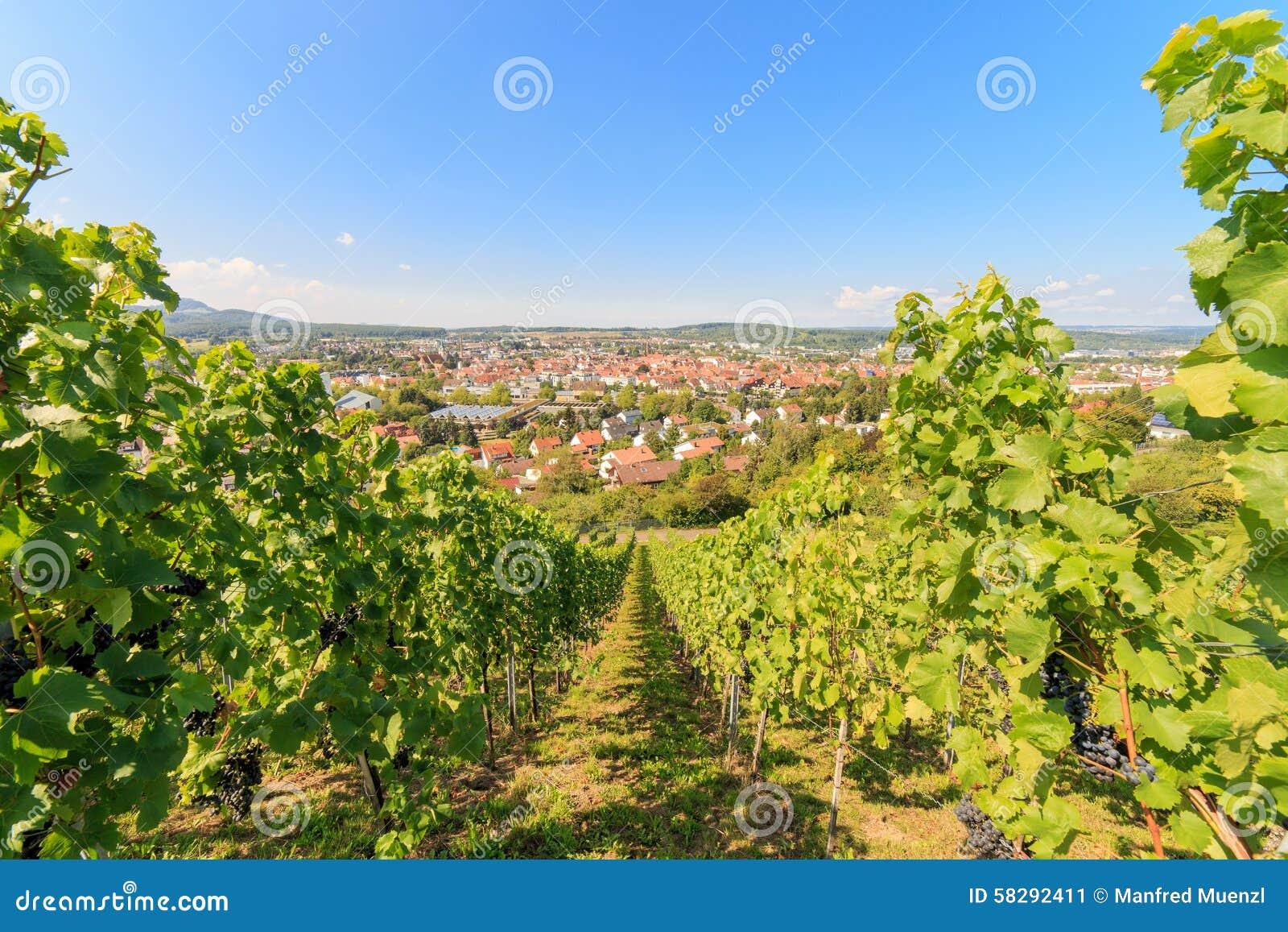 Ausgang-Einkaufsstadt Metzingen umgeben durch Weinberge
